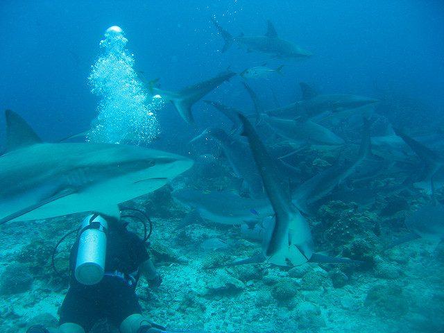 scuba dive roatan bay islands honduras