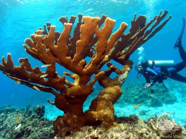 roatan aggressor honduras liveaboard scuba diving