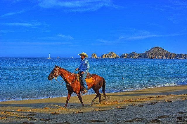 cabo horseback riding baja scuba