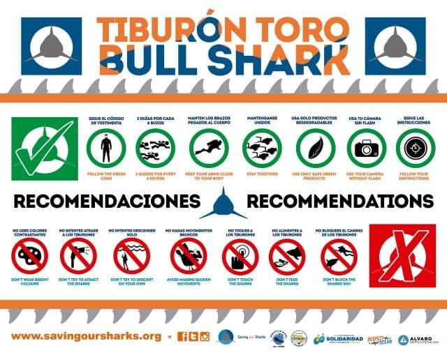 bull shark diving mexico yucatan