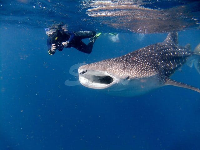 djibouti diving review