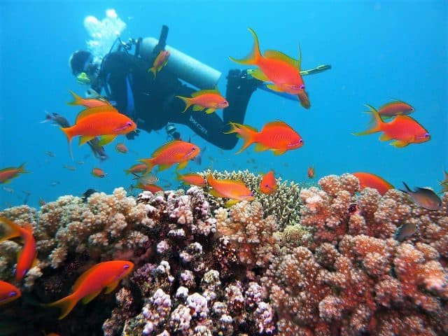 sustainable scuba diving environment friendly