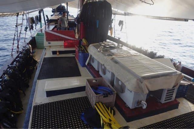 jaya indonesia diving cruise budget liveaboard