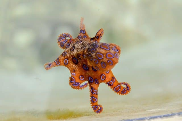 most dangerous marine creatures