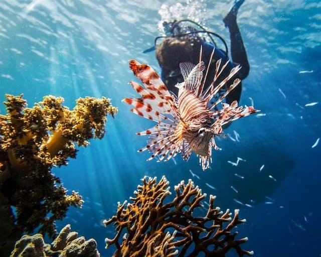 scuba diving lion fish most dangerous marine creatures