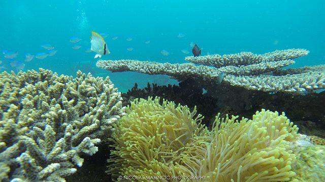 madagascar diving review