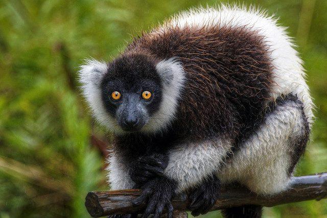 Some Wildlife is only found in Madagascar photo by mariusz kluzniak