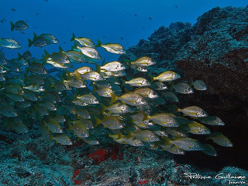 Scuba Diving Tenerife Canary Islands