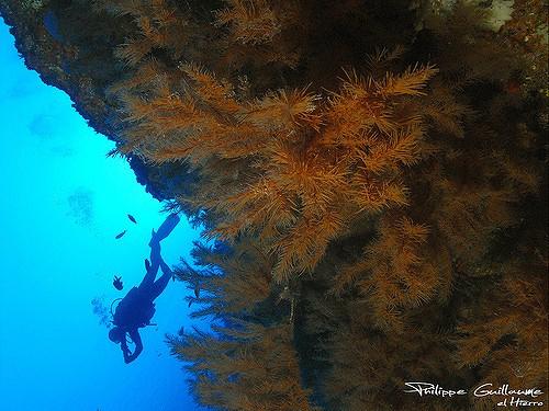 spain diving review