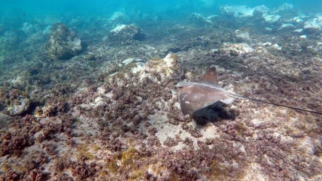 marine reserve canary islands spain