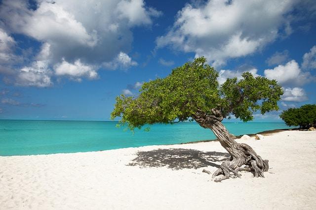 Aruba's Eagle Beach photo by Chris Ford