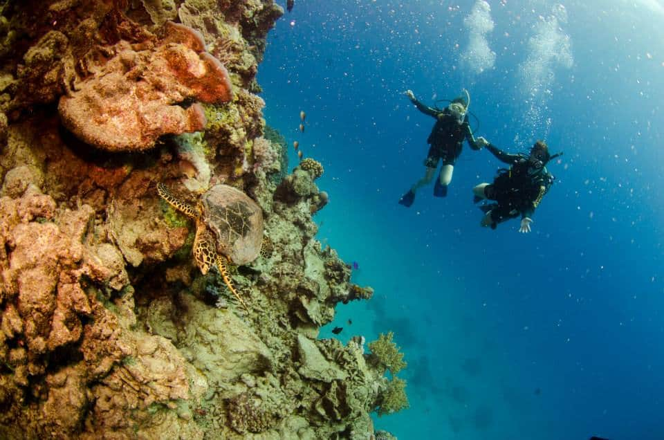 bucket list diver australia scuba diving ningaloo reef