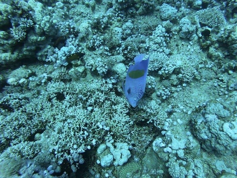 scuba diving eilat israel