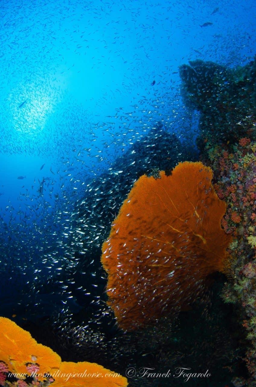 diving mergui archipelago burma liveaboard
